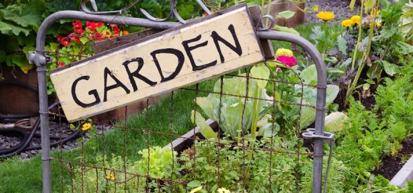 Tips for a Beautiful Backyard Garden