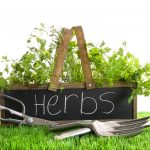 Popular Types Of Herb Gardens