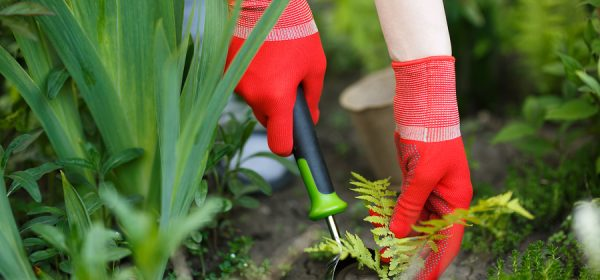 Gardening Tips So That Your Garden Will Grow