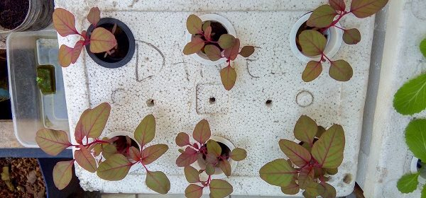 Easy Hydroponics for Beginners