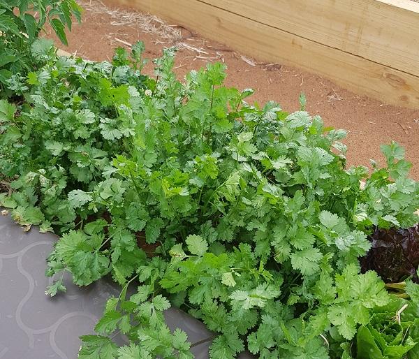 Herbs and the Subpod Worm Farm