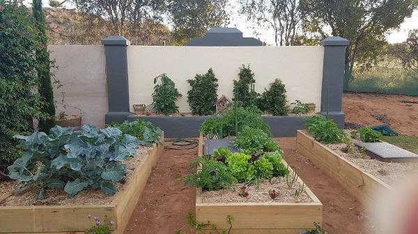 Subpod Worm Farm Vegetable Garden