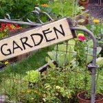 Tips for a Beautiful Backyard Garden
